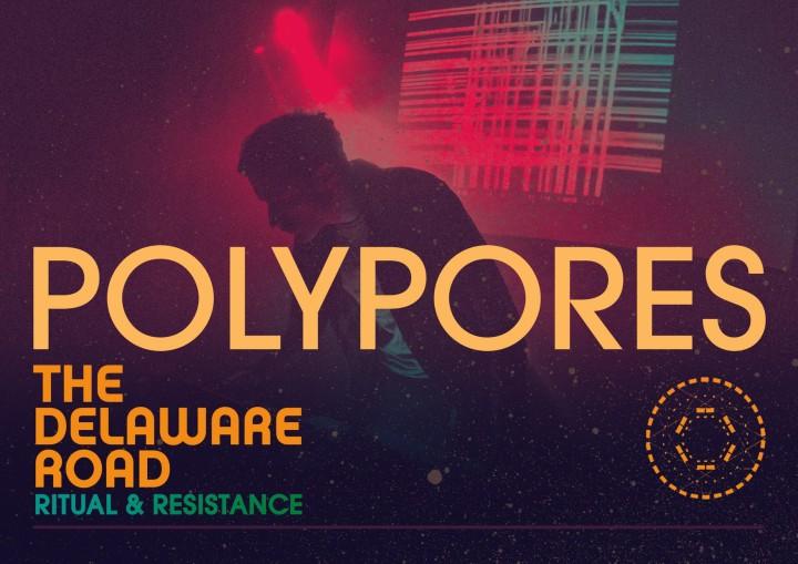 DR-Polypores