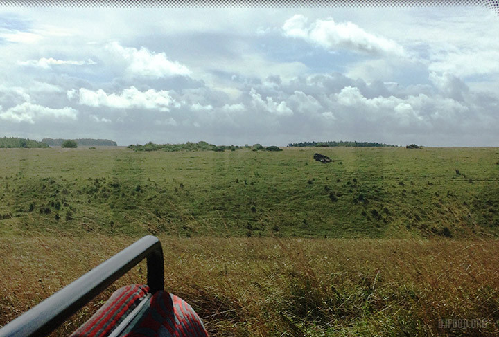 DR Salisbury plains